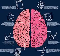 cerveau2_pngtree